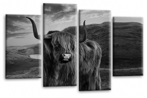 Scottish Highland Cattle Canvas Art Picture Grey White Animal Split Wall Print